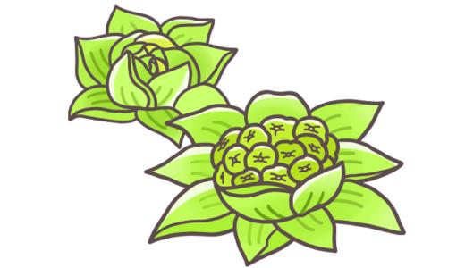 【野菜】ふきのとうのフリーイラスト